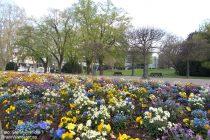 Oberrhein: Blumenbeet im Mainzer Stadtpark - Foto: Stefan Frerichs / RheinWanderer.de