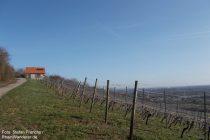 Oberrhein: Weinberghaus bei Bodenheim - Stefan Frerichs / RheinWanderer.de