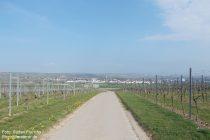Oberrhein: Weinbergweg bei Bodenheim - Stefan Frerichs / RheinWanderer.de