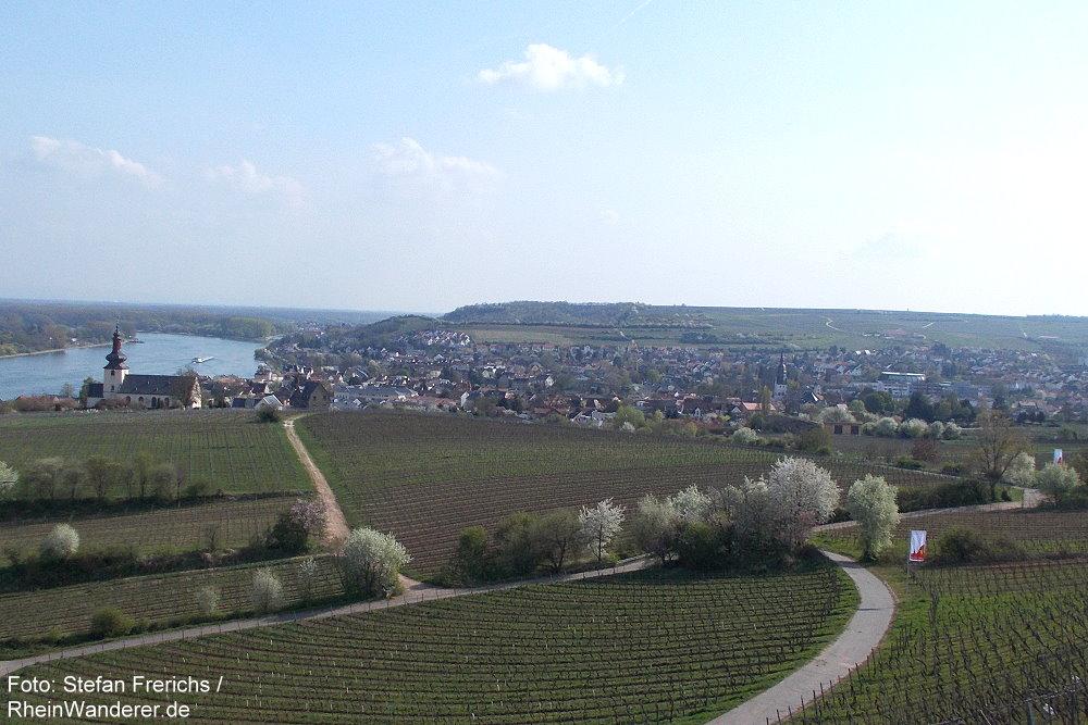 Oberrhein: Blick auf Nierstein - Foto: Stefan Frerichs / RheinWanderer.de