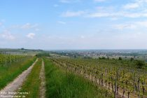 Oberrhein: Blick Richtung Alsheim - Foto: Stefan Frerichs / RheinWanderer.de