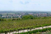 Oberrhein: Blick auf Mettenheim - Foto: Stefan Frerichs / RheinWanderer.de