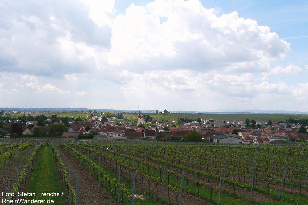 Oberrhein: Blick auf Bechtheim - Foto: Stefan Frerichs / RheinWanderer.de