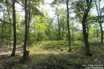 Mittelrhein: Hügelgräber im Breyer Wald - Foto: Stefan Frerichs / RheinWanderer.de