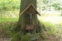Mittelrhein: Pilger-Wegkreuz im Breyer Wald - Foto: Stefan Frerichs / RheinWanderer.de