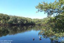 Amrum: Teich in der Vogelkoje Meeram - Foto: Stefan Frerichs / RheinWanderer.de
