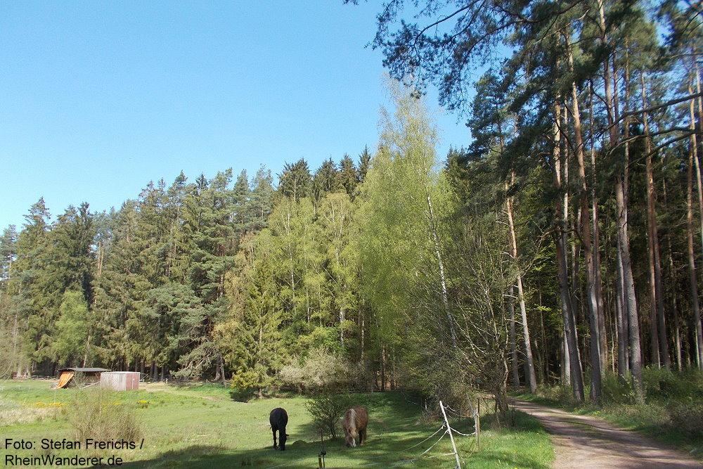Pfälzerwald: Tal des Reinigshofbach bei Bruchweiler-Bärenbach - Foto: Stefan Frerichs / RheinWanderer.de