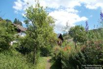 Mittelrhein: Rheinsteig am Schlierbach in Braubach-Nord - Foto: Stefan Frerichs / RheinWanderer.de