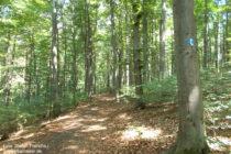 Mittelrhein: Rheinsteig im Horchheimer Wald - Foto: Stefan Frerichs / RheinWanderer.de
