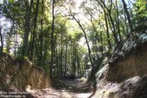 Odenwald: Hohlweg unterhalb von Schloss Alsbach - Foto: Stefan Frerichs / RheinWanderer.de