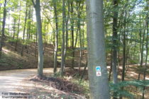 Odenwald: Commoder Weg hinter Schloss Alsbach - Foto: Stefan Frerichs / RheinWanderer.de