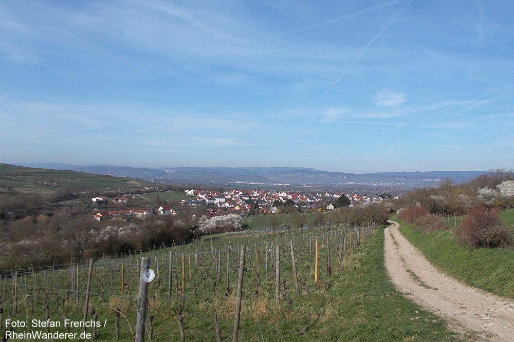Inselrhein: Blick ins Welzbachtal bei Gau-Algesheim - Foto: Stefan Frerichs / RheinWanderer.de