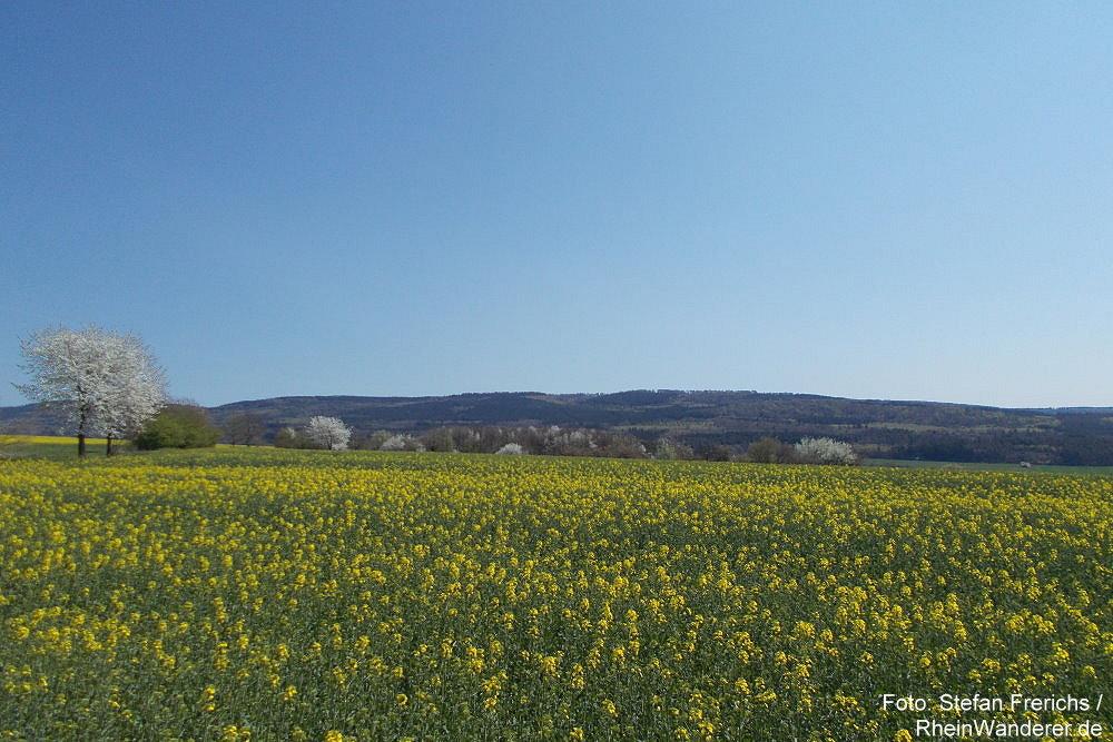 Hunsrück: Panoramablick zum Soonwald - Foto: Stefan Frerichs / RheinWanderer.de