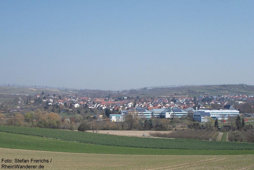 Inselrhein: Blick auf Schwabenheim - Foto: Stefan Frerichs / RheinWanderer.de