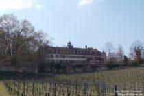 Inselrhein: Schloss Westerhaus von der Hangseite - Foto: Stefan Frerichs / RheinWanderer.de