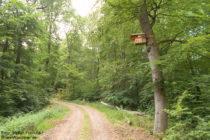 Mosel: Wanderweg im Wald bei Bullay - Foto: Stefan Frerichs / RheinWanderer.de