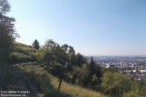 Odenwald: Burgensteig vor Laudenbach - Foto: Stefan Frerichs / RheinWanderer.de