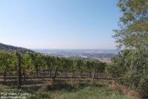 Odenwald: Blick auf die Weinlage Laudenbacher Sonnberg - Foto: Stefan Frerichs / RheinWanderer.de