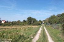 Odenwald: Weg vor Hemsbach - Foto: Stefan Frerichs / RheinWanderer.de