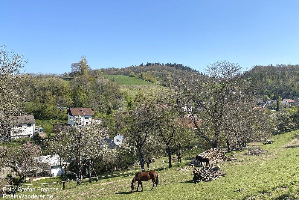 Odenwald: Blick am Nächstenbach - Foto: Stefan Frerichs / RheinWanderer.de