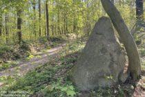 Odenwald: Fels und Baum am Hirschkopf - Foto: Stefan Frerichs / RheinWanderer.de