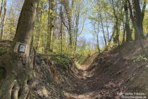 Odenwald: Hohlweg beim Neuen Forstweg nahe Weinheim - Foto: Stefan Frerichs / RheinWanderer.de