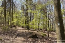 Odenwald: Wanderweg am Wachenberg - Foto: Stefan Frerichs / RheinWanderer.de