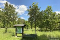 Ahr: Generationenwald Sinzig - Foto: Stefan Frerichs / RheinWanderer.de