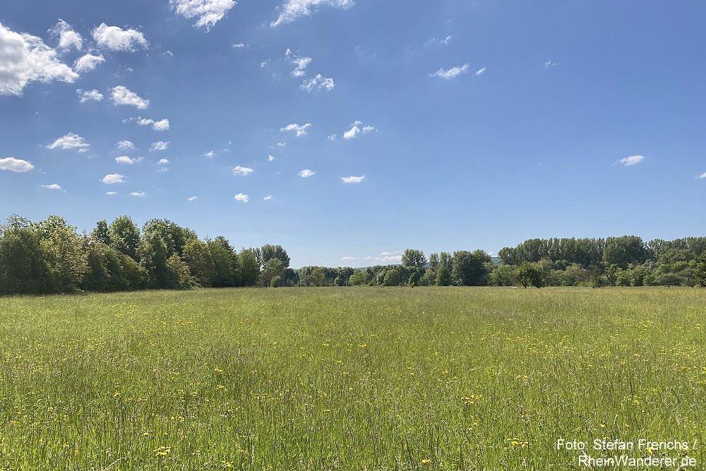 Ahr: Naturschutzgebiet bei Kripp - Foto: Stefan Frerichs / RheinWanderer.de